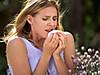 Pollen_allergy