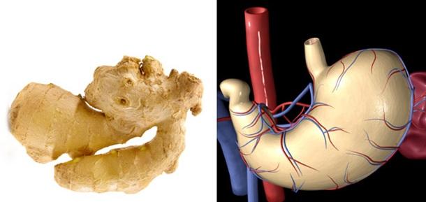 Gingerstomach